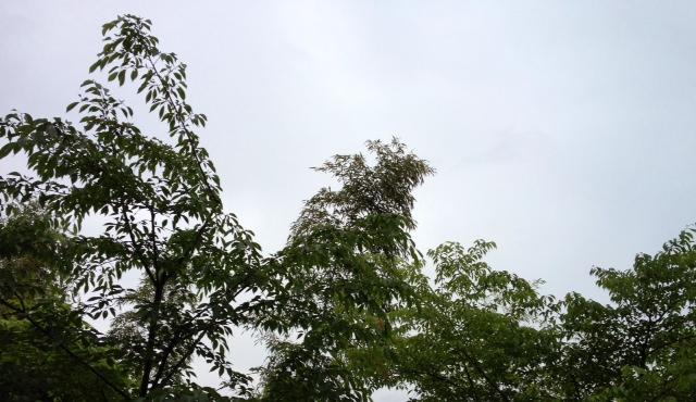 雨だ(;_;)