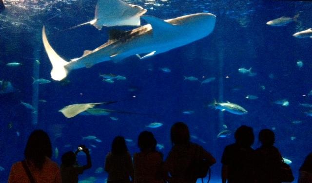 鹿児島水族館