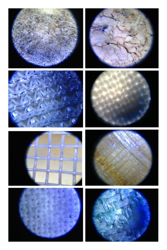 顕微鏡写真