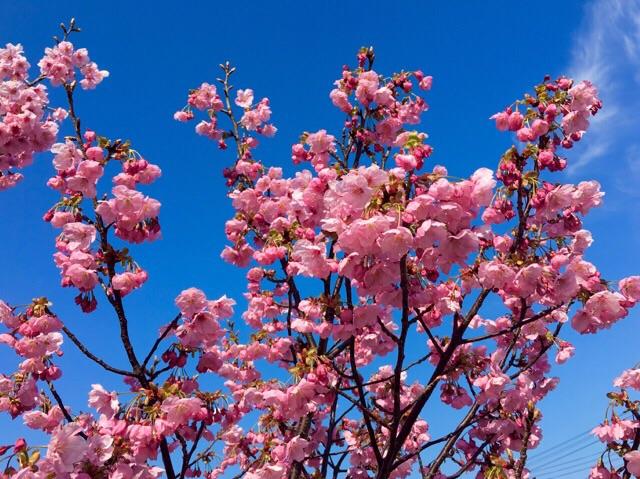 春来たー(≧∇≦)